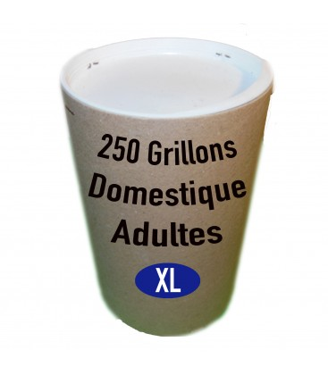 Tube de 250 Grillons Domestiques Adultes