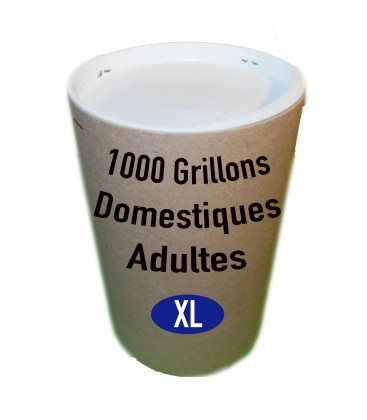 Tube de 1000 Grillons Domestiques Adultes