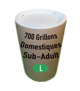 Tube de 700 Grillons Domestiques SubAdultes (T. 7)