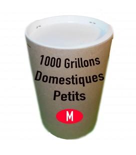 Tube de 1000 grillon DOmestique Petit (T. 5)
