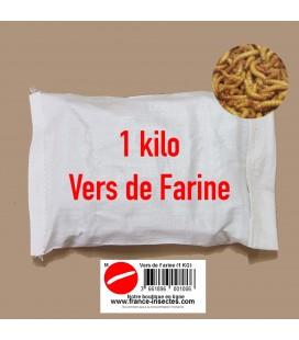 VERS DE FARINE (Moyen) 1 Kg