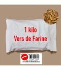 vers de farine insectes pour oiseaux insectivore et insectes pour reptiles