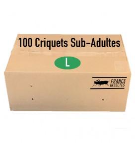 Carton de 100 Criquets Sub-Adultes (L)