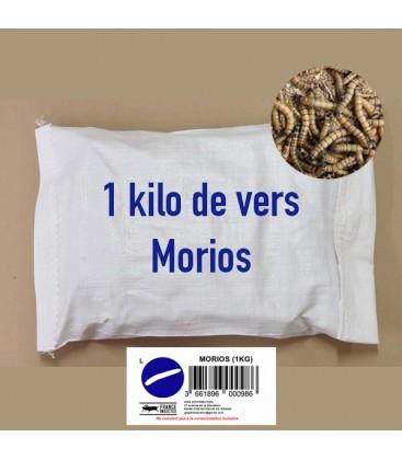 1 Kg de Vers Morios