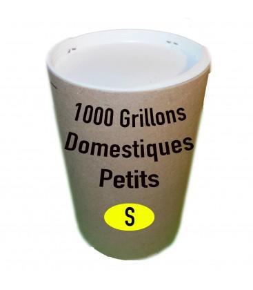 Tube de 1000 grillon Domestique Petit (T. 3)