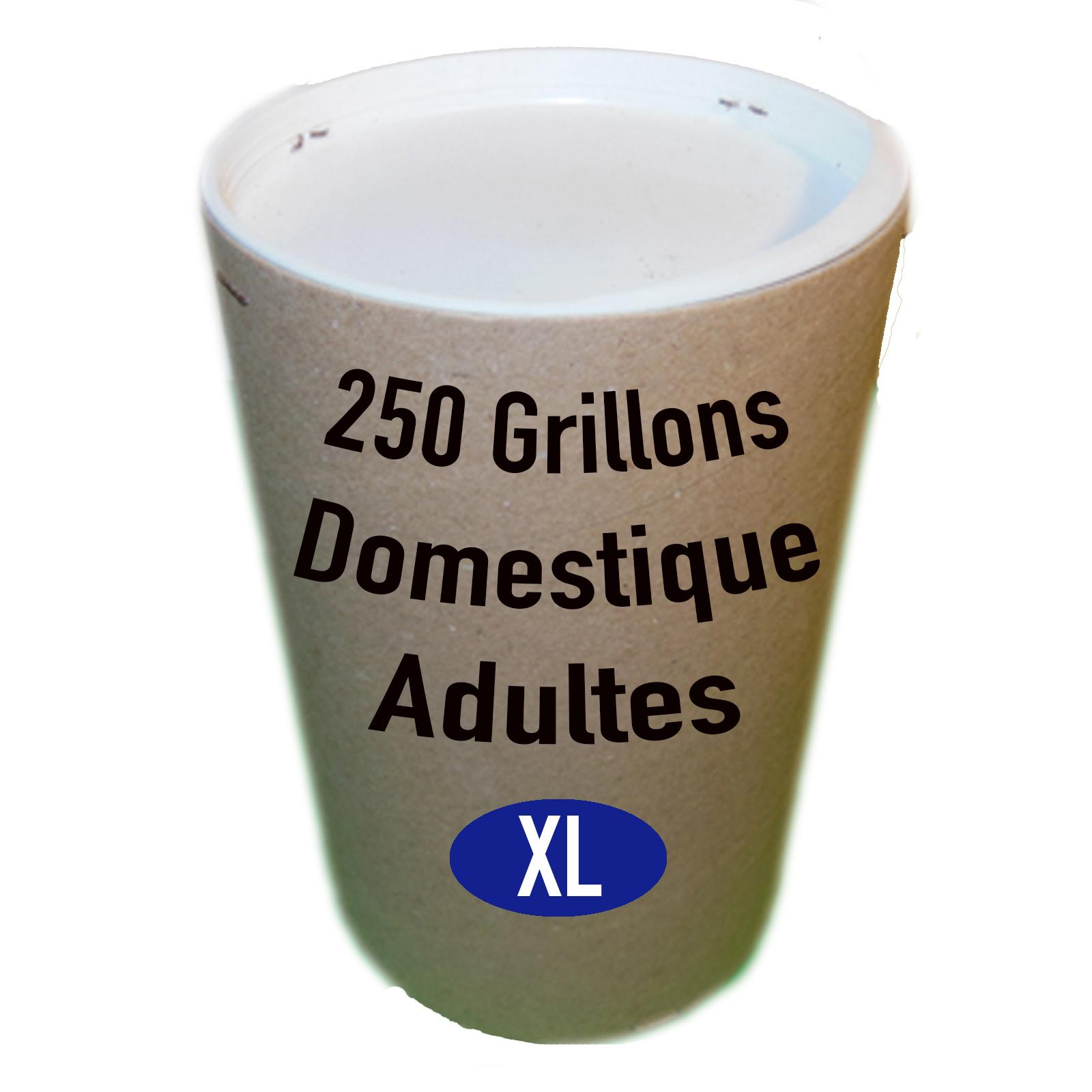 GRILLONS DOMESTIQUES ADULTES X250