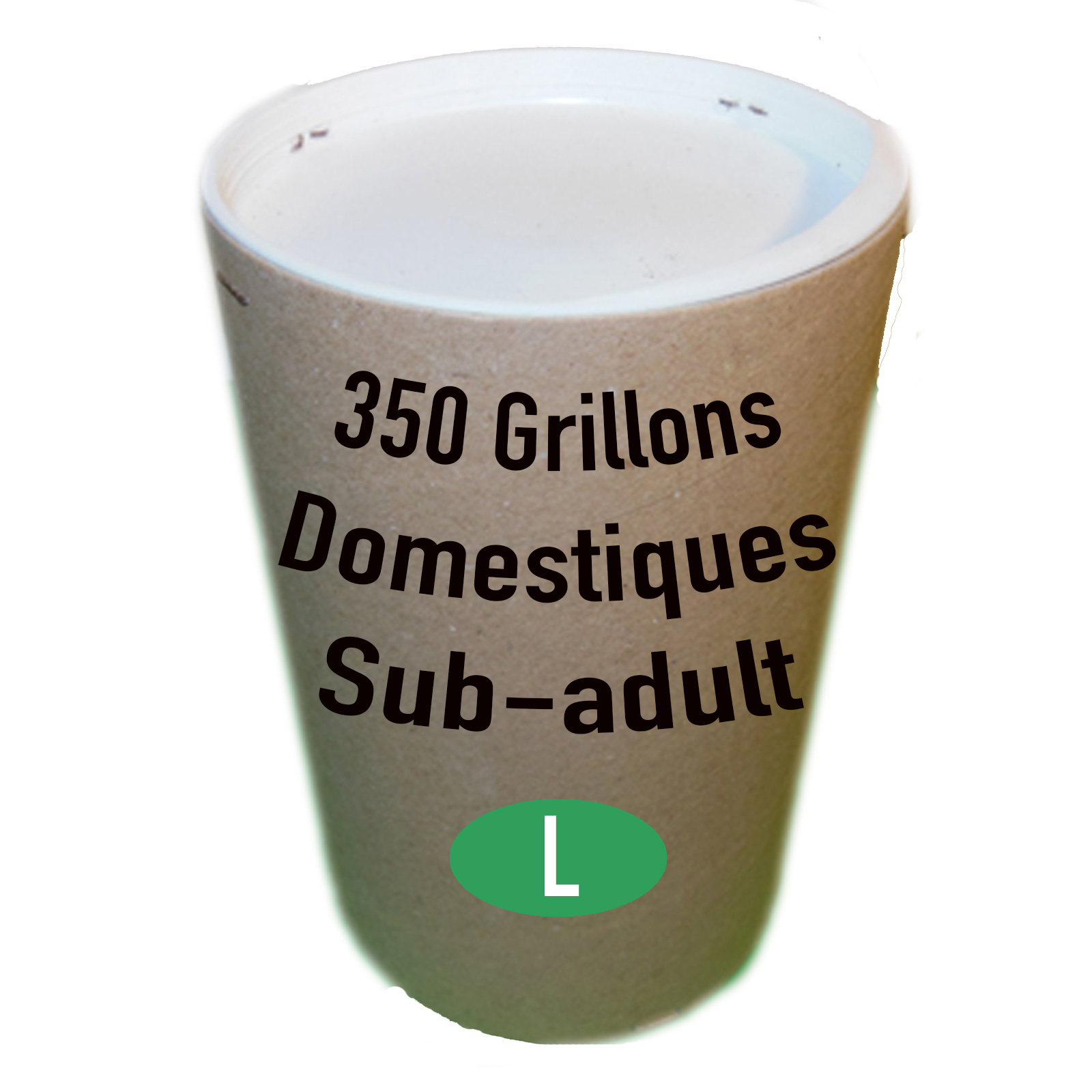 GRILLONS DOMESTIQUES SUB ADULTES X 350