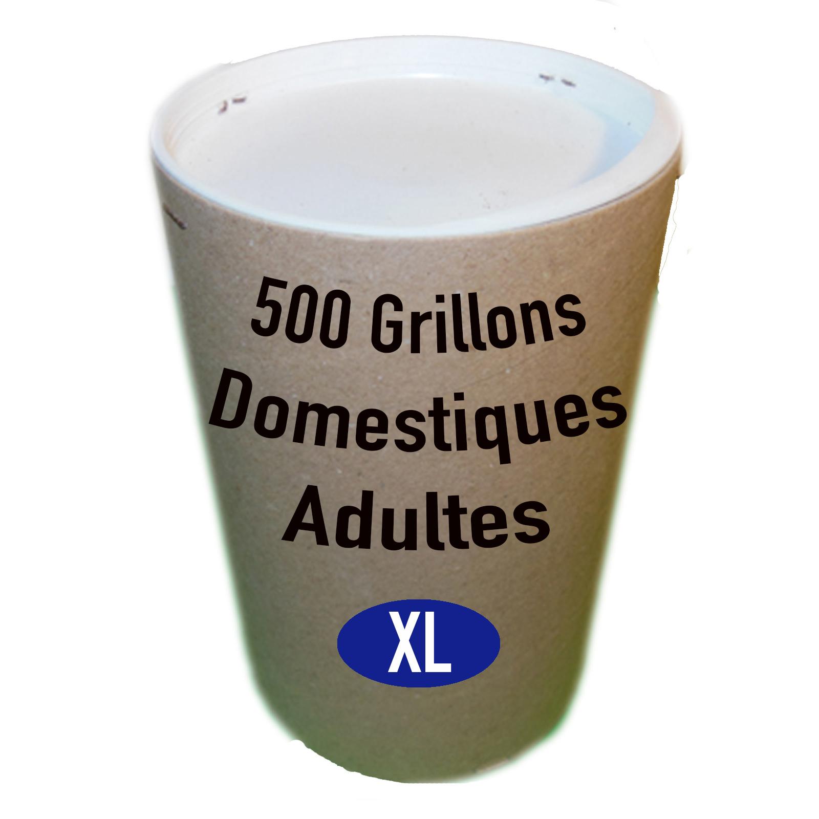 GRILLONS DOMESTIQUES ADULTES PAR 500