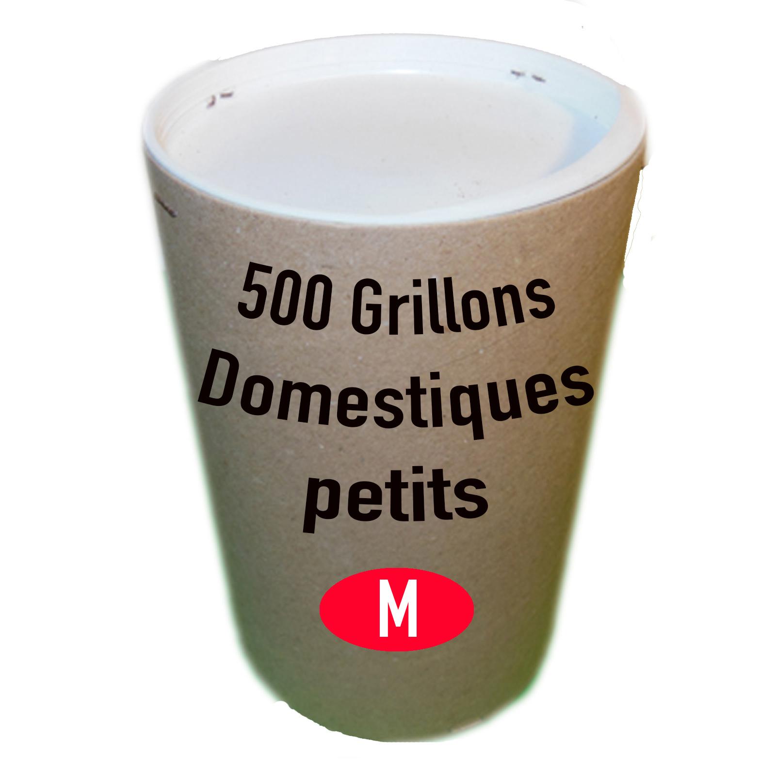 Grillons domestiques moyen par 500