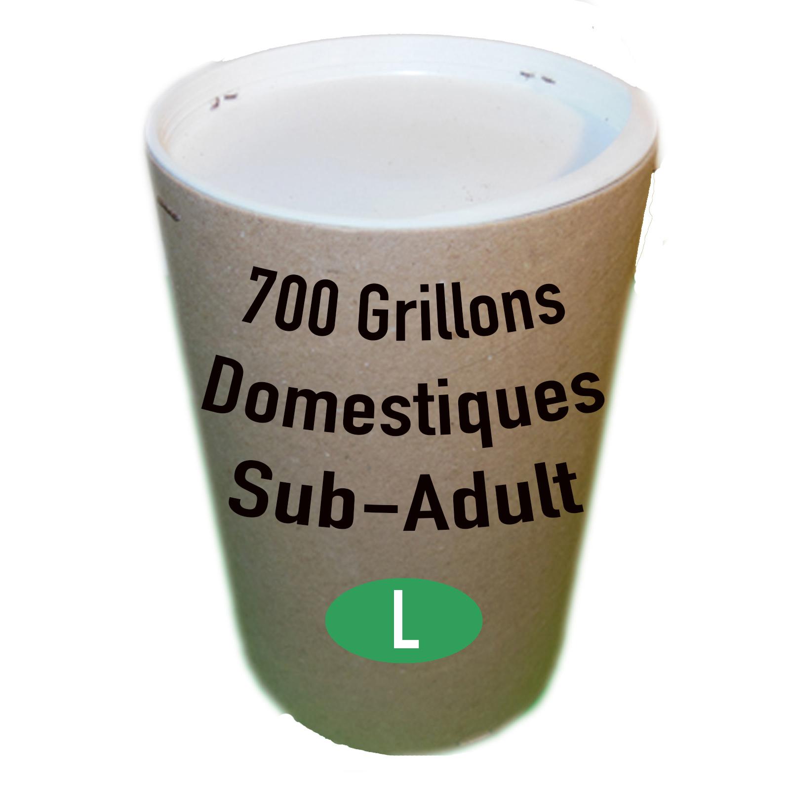 GRILLONS SUB ADULTES PAR 700