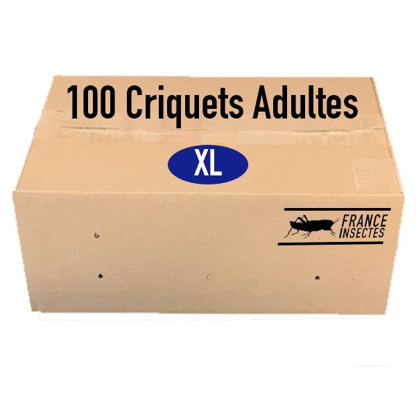 CRIQUETS ADULTES PAR 100