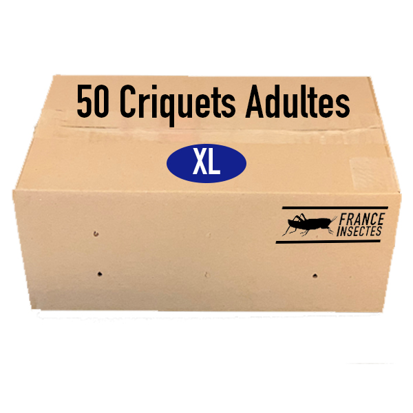 CRIQUET ADULTES PAR 50